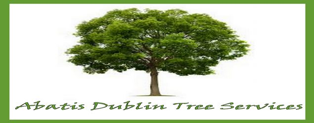 Tree pruning and trimming in the Dublin Area | Abatis Dublin Tree Services.