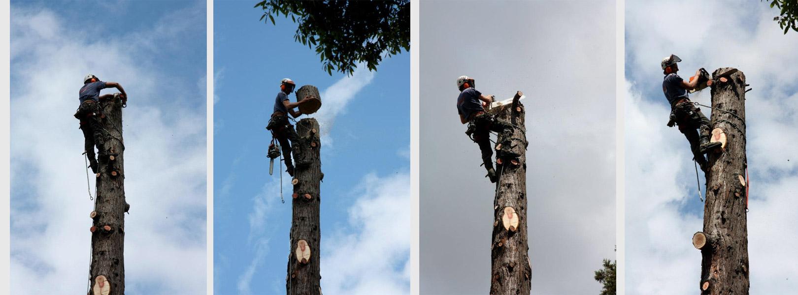 Tree Services Company In Dublin Abatis Dublin Tree Surgeon